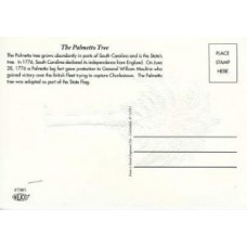 Palmetto Tree Post Cards Natural White