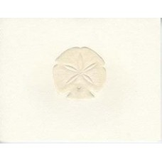 Sand Dollar, Peach Embossed